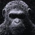 planete-singes-suprematie